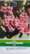 Reliance Seedless Grape 2 Gal Vine Plants Vines Plant Grapes Vineyards Garden