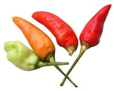 30 HOT BIRDS EYE CHILI PEPPER Chiltepin Capsicum Seeds