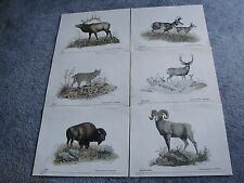 Vintage set of (6) Reproduction-Wildlife Art Prints- from painting by D.THOMPSON