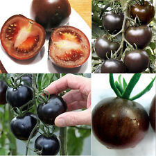 20PCS Rare Seeds Tomato Black Cherry Russian Heirloom Vegetable Seed NEW