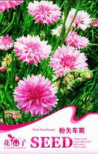 50 Original Package Seeds Pink Cornflower Seeds Bluebonnet Centaurea Cyanus A057