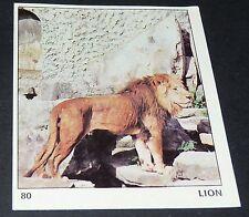 N°80 LION PANINI 1970 TOUS LES ANIMAUX EDITIONS DE LA TOUR