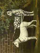A4 Photo Barber Burton Book Dog 1881 Bull Terrier & Dalmation Print Poster