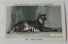 Image Collection CHROMO : TIGRE (ASIE) (38) PARC ZOOLOGIQUE de VINCENNES