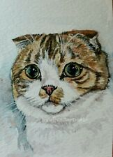 ORIGINAL Watercolor Painting ACEO Cat scottish fold Artist Animal Halie French