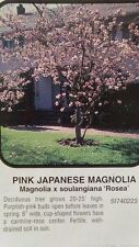 Pink Japanese Magnolia Tree Large Flowering Trees Plant Landscape Shade Flowers