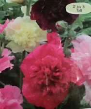 Dwarf Hollyhock Majorette Mix  Flower Seeds