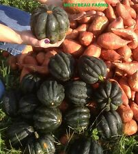 1/2 Ounce TABLE QUEEN ACORN SQUASH SEEDS. Premium USA Seeds. Heirloom. Non-GMO.