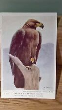 Collection of wildlife vintage postcards British Museum ( 7 post cards in total)