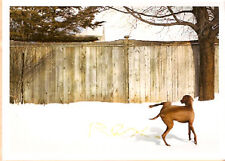 Vizsla Christmas Cards Rex Writes His Name Box of 10