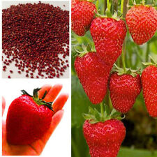150Giant Home Garden New Red Strawberry Seeds Excellent High in Vitamin Fruit
