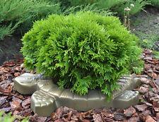 BIG 20″TURTLE Tortoise MOLD Decorative FLOWER GARDEN  CONCRETE Mould  #F03