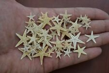 "1000 PCS TINY SMALL FLAT TAN STARFISH SEASHELL CRAFT DECOR 1/2"" - 3/4"" #7143"