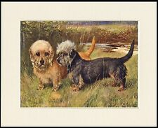 DANDIE DINMONT TERRIER TWO DOGS LOVELY DOG ART PRINT MOUNTED READY TO FRAME
