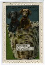 c 1933 Cute Pups DACHSHUND in Wicker BASKET CASE DOGS photo postcard