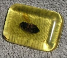 Bug In Ice Cube - Jokes, Gags, Pranks - 3 Bug In Ice Cubes For One Low Price!