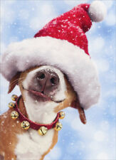 Big Dog With Santa Hat 10 Boxed Funny Christmas Cards by Avanti Press