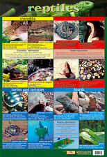 Educational Poster Reptiles - Crocodiles Snakes Lizards Turtles Tortoises (0123)
