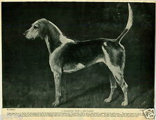 1930 Book Plate Dog Print Staghound Gentleman Devon Somerset Exmoor Stanley