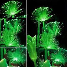 100Pcs Rare Night Light Fluorescent Emerald Flower Seeds Emitting Plants Garden