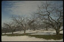 199005 Apple Orchard In Late Winter Near Beebe Quebec A4 Photo Print