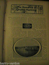Orchids Orchi Orchid Orchidaceae Hunting Flower Antique Rare Old Article 1902