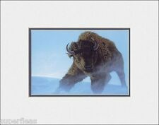 New Wild BISON by CHRISTOPHER WALKER matted realism art print PERSISTENCE