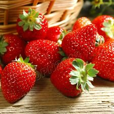 200x Red Strawberry Seeds Berry Bacca Plant Everbearing Fruit Garden Yard Field