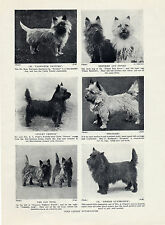 CAIRN TERRIER IMAGES OF NOTABLE NAMED DOGS ORIGINAL DOG PRINT PAGE FROM 1934