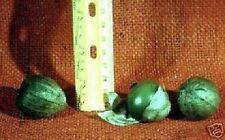 Schnellwüchsige Pflanzen - Grüne Lampionblume /Samen / Kostenloses Gemüse ernten