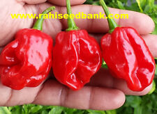 Red Savina Habanero Chilli -  The King of all Habanero Chilli Peppers