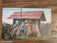 Vintage Postcard CABIN IN CEDAR STUMP - WASHINGTON - Mitchell - 1 cent