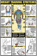 WEIGHT TRAINING STRETCHES Stretching Guide Professional Fitness Club Gym Poster