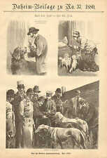 Berlin Dog Show, Greyhounds, Newfoundland, Vintage, 1880 German Antique Print.