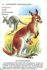 Kangourou Kangaroo Känguru PLAYING CARD CARTE A JOUER OLD ANCIEN