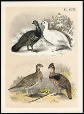 Antique Print-ROCK PTARMIGAN-WHITE-WOOD GROUSE-WESTERN RUFFED-OREGON-Jasper-1878