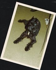 Old Vintage Photograph Adorable Black Puppy Dog Laying On Floor 1978