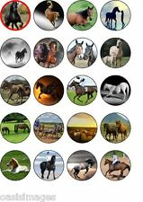 horse  20 x edible cup cake toppers party pony stallion horses