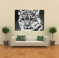SNOW LEOPARD animale NUOVO GIGANTE POSTER WALL ART PRINT PICTURE G181