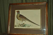 Antique Lithograph Bird The Pheasant Painted & Engraved on 1793 by T. Lord