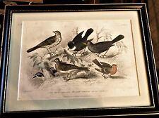 ANTIQUE FRAMED PRINT BLACKIE SON COLOUR PLATE 58 GARDEN BIRDS STEWART BISHOP