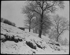 Glass Magic Lantern Slide FROSTED TREES ON BANK C1890 PHOTO SNOW WINTER SCENE