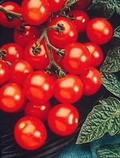 Husky Cherry Red Tomato Seed