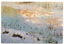 Bulrushes Ompompanoosuc River Vermont Postcard Connecticut River Frozen Snow