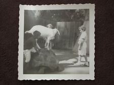 BOY AND A GOAT ON TOP OF A GIANT TORTOISE  VTG 1950's  PHOTO