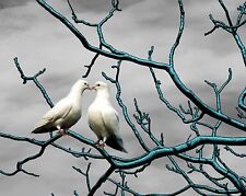 Teal, Gray & White Home Decor Wall Art Photo Print Bird B&W Bedroom Picture Dove