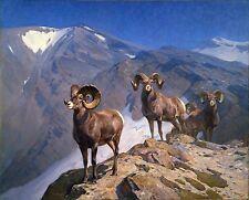 "Carl Rungius, BIG HORN SHEEP, Rams, Wildlife, antique wall decor, 14""x11"" ART"