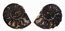 Hematite Ammonite Ancient Sea Life Fossil Dinosaur Specimen Sliced Pair Morocco