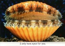 Calico Scallop Only Have Eyes For You Funny Bivalve Greeting Card - Not Postcard