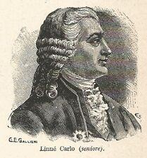 A7196 Carlo Linné - Stampa Antica del 1928 - Xilografia